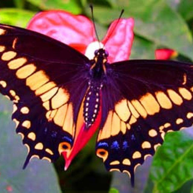 Casa delle farfalle Cervia