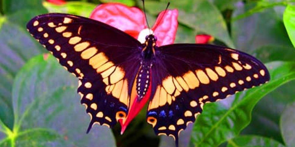 https://www.hotelsedonia.com/wp-content/uploads/2013/06/casa-delle-farfalle-cervia-1.jpg